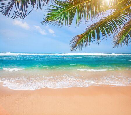 plage tropicale avec cocotier Banque d'images
