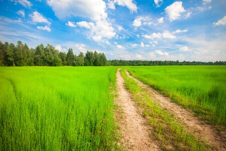 beautiful field and road Stock Photo