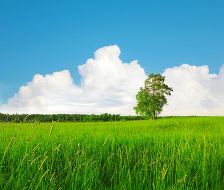 beautiful green field and tree Stock Photo