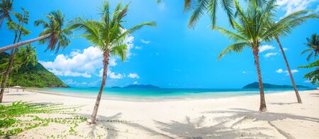 panorama of tropical beach with coconut palm