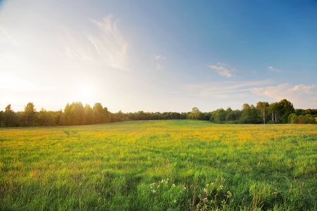 beautiful field at sunset time
