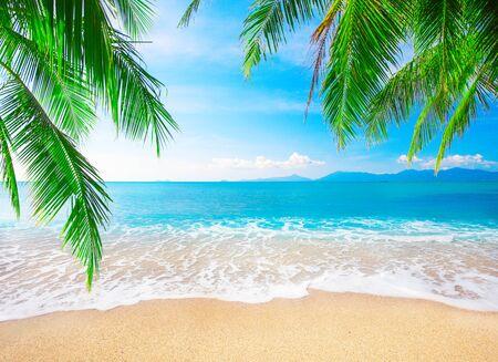 tropikalna plaża z palmami kokosowymi
