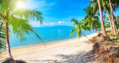 Beautiful tropical beach and coconut palm trees, Koh Samui, Thailand Stock Photo