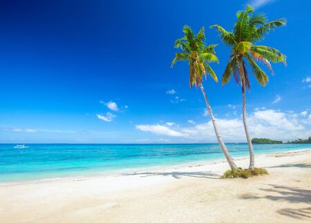 panoramic tropical beach with coconut palm Banque d'images