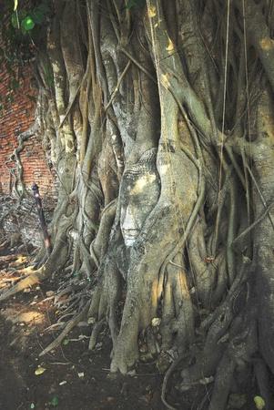 The head of Buddha at Wat Mahathat in Ayutthaya Thailand.