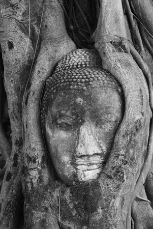 The head of Buddha at Wat Mahathat in Ayutthaya Thailand. photo