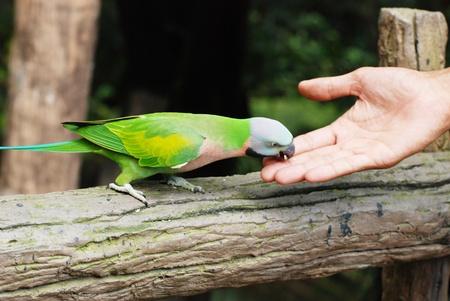 feeding the lorikeet birds with sunflower seeds  Stock Photo - 10590959