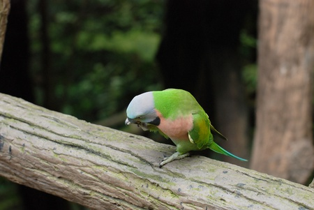 The Beautiful Parrot on the tree in the forest Stock Photo
