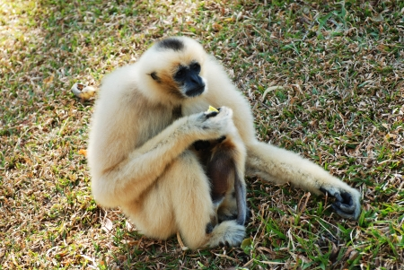 a mother monkey is feeding the baby photo