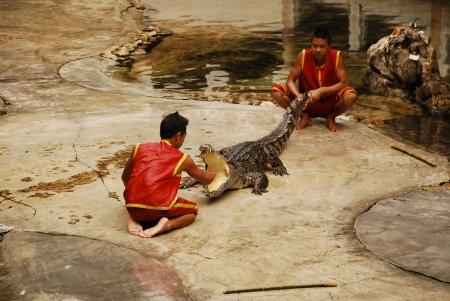 The Crocodylidae or crocodile show in Thailand on 9 May 2009