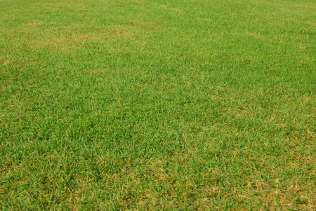 Beautiful green grass texture from golf course photo