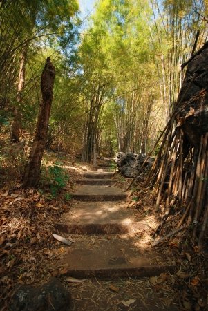 The path leading into a tropical garden photo