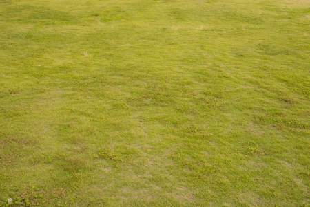 The green grass background texture the wallpaper photo