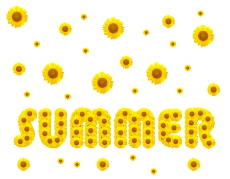 The summer season with sunflowers on the background photo