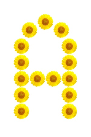 The sunflower alphabet A on the white background photo
