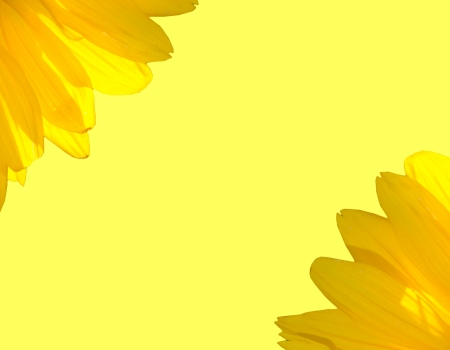 The bright beautiful sunflower on the background