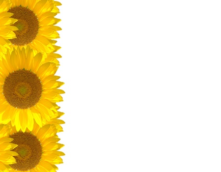 The bright beautiful sunflower on the background Stock Photo - 14535939