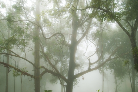 The foggy and mystical forest in Thailand photo