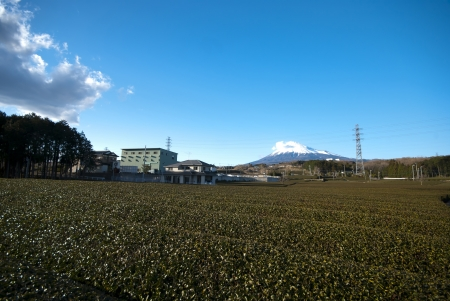 Rows of fresh green tea with Mount Fuji photo