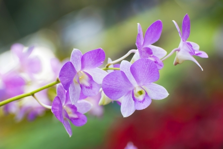 The colorful of the orchid flower in the tropical Asian photo
