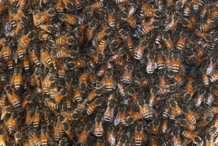 Close up view of the working bees Stock Photo