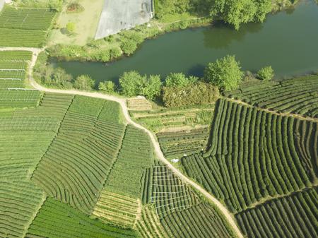 Aerial photography green tea garden Stok Fotoğraf