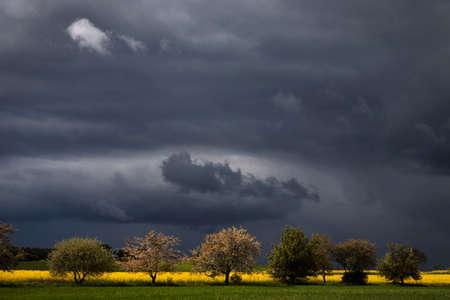 arbres fruitier: Nuages ??orageux au-dessus des arbres fruitiers au printemps