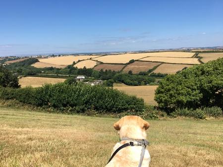 Dog looking across Devon hills