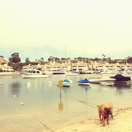 balboa: Balboa Island on a summer day.