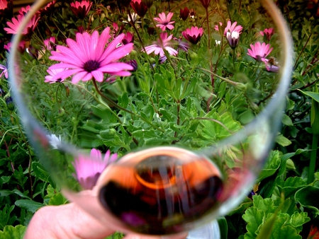 Glass of Red Wine Garden Flower Theme in Spring Time photo