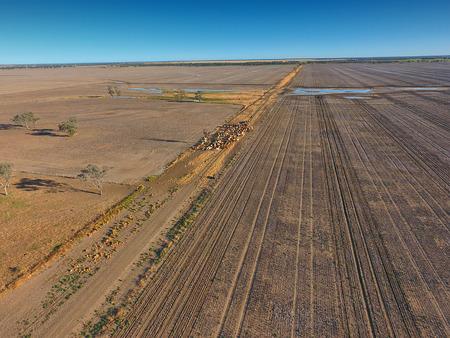 Luchtfoto van Outback Cattle-behuizing met veestapelkoeien en stieren in droogte en stoffige omgeving. Klaar voor veiling en veeteelt. Compleet met schapenhonden en cowboyboeren.
