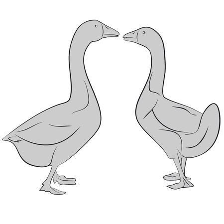 An a vector illustration of two goose  Files included  AI8 EPS and JPG
