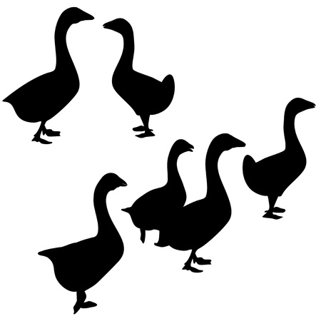 farmed: An a vector illustration of goose  Files included  AI8 EPS and JPG