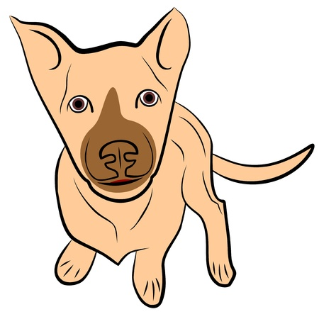 An a vector illustration of  puppy  Files included  AI8 EPS and JPG  Illustration