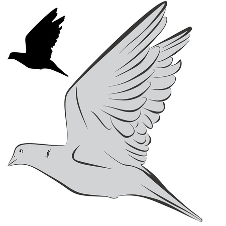 An a vector illustration of Dove   Files included  Illustrator 8 EPS  and JPG Vector