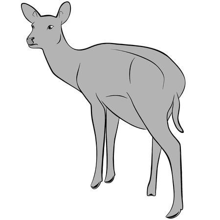 An a vector illustration of Deer   Files included  Illustrator 8 EPS  and JPG