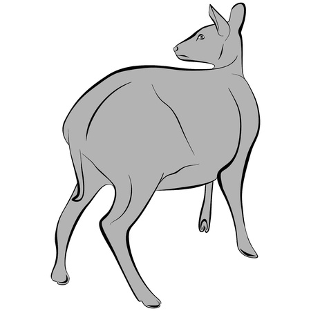 An a vector illustration of Deer   Files included  Illustrator 8 EPS  and JPG Stock Vector - 18219328