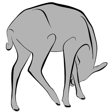 An a vector illustration of Deer   Files included  Illustrator 8 EPS  and JPG Stock Vector - 18219362