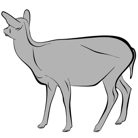An a vector illustration of Deer   Files included  Illustrator 8 EPS  and JPG Stock Vector - 18219359