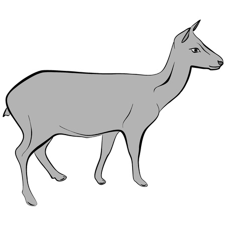 An a vector illustration of fawn   Files included  Illustrator 8 EPS  and JPG