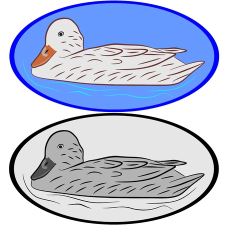 An illustration of Duck