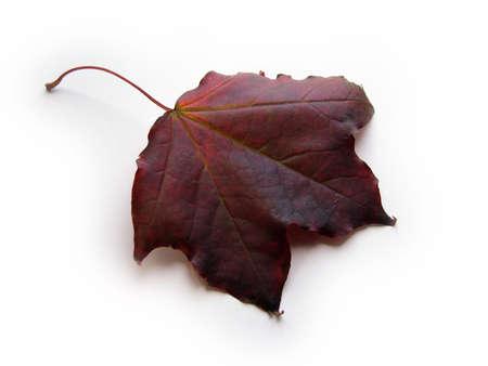 browns: Brown Leaf Stock Photo