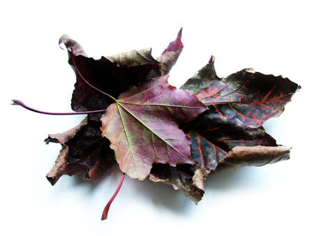 Brown Leaves Stock Photo - 358305