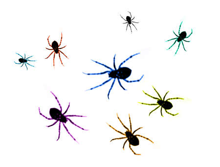 Colored Spiders Stock Photo