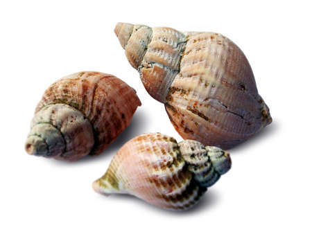 touched: Three Sea Shells
