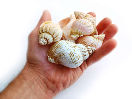 touched: Hand holding Sea Shells