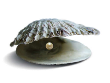 Sea Shell Pearl Stock Photo