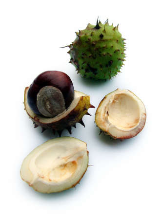 Opened Conkers Stock Photo - 368293