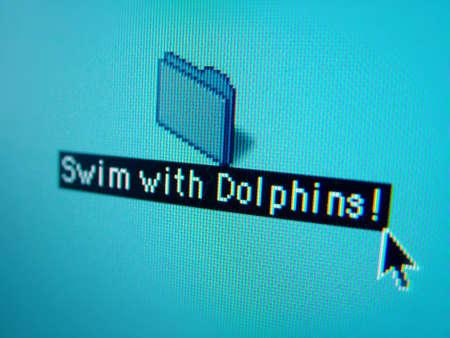 swim with dolphins photo
