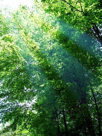 browns: Woodland